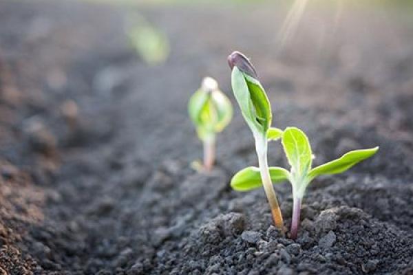 生态环境部首发六项土壤检测相关标准征求意见稿 涉及LCMS等方法